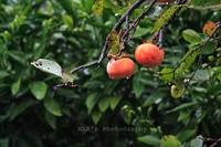 October_rain004