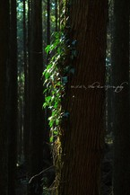 Forest032