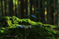 Forest033