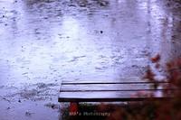 Rainday011