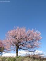 Sakura022_2