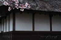 Sakura041_2
