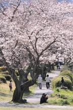 Sakura061