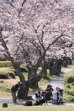 Sakura062